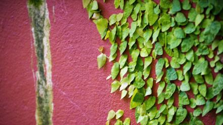 Green nature winter pink wall leaves colors Wallpaper