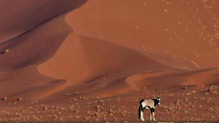 Landscapes nature animals desert national geographic antelope namib wallpaper