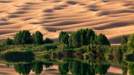 National geographic oasis camels sand dunes reflections wallpaper