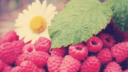 Nature flowers fruits leaves raspberries wallpaper