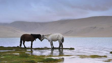 Water landscapes nature animals national geographic horses affection wallpaper