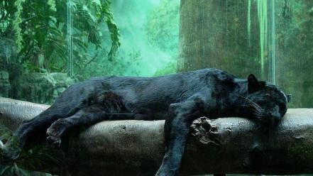 Animals puma panthers series black panther rest wallpaper