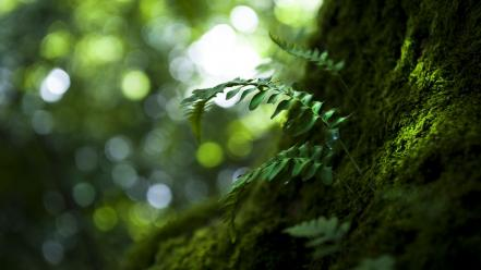 Green nature forest grass macro ferns wallpaper