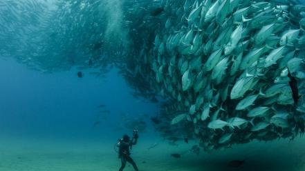 Animals fish national geographic Wallpaper