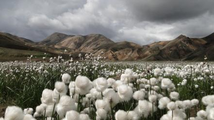 Mountains landscapes nature fields national geographic iceland cotton Wallpaper