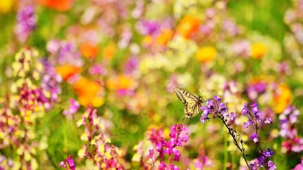 Multicolor flowers meadow butterflies wallpaper