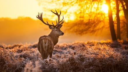 Animals fog deer wallpaper
