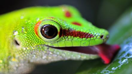 Lizards reptiles wallpaper