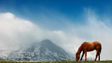 Landscapes animals horses wallpaper