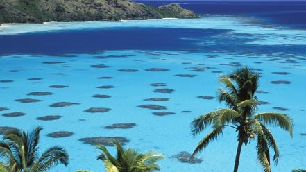 Nature islands french polynesia palm trees seascapes Wallpaper