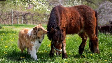 Animals dogs horses Wallpaper