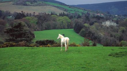 Hills ireland horses countryside castle wallpaper