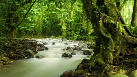 Jungle forest leaves rivers wallpaper