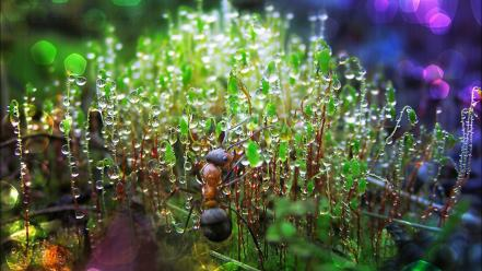 Multicolor insects ants moss water drops macro Wallpaper