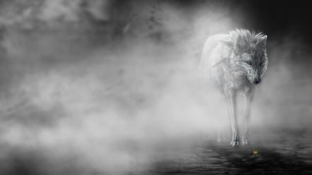 Black and white animals wolves wallpaper