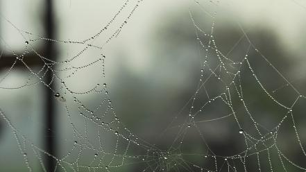Water drops macro dew spider webs wallpaper