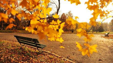 Nature romania autumn wallpaper