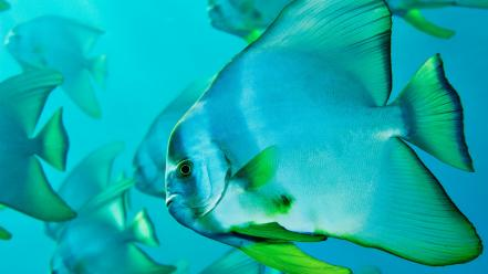 Nature fish national geographic wallpaper