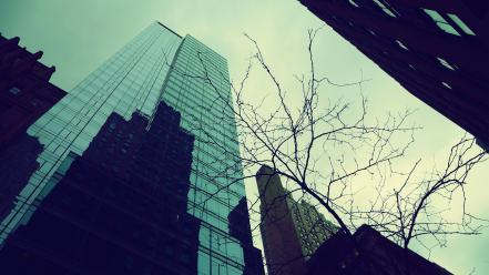 Trees glass buildings new york city wallpaper