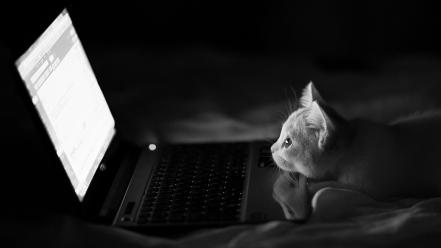 White cats funny laptops kittens gmail animals wallpaper