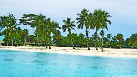 Water landscapes nature beach trees palm bahamas wallpaper