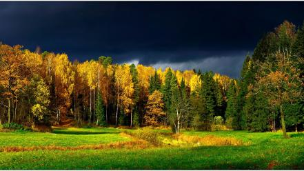 Landscapes nature forest leaves finland autumn wallpaper