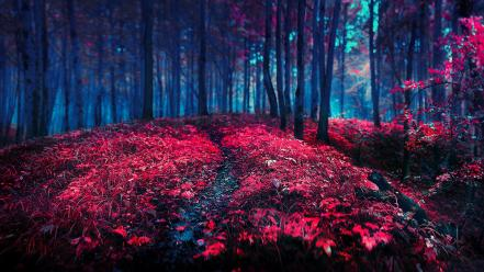 Nature red wallpaper
