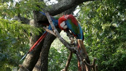 Trees birds parrots wallpaper