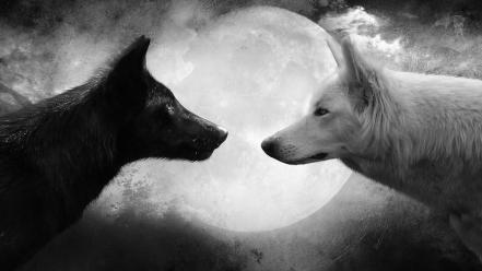 Black and white animals moon grayscale wolves wallpaper