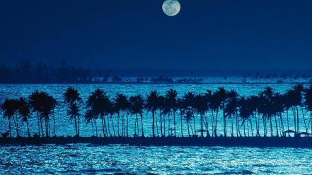 Moon palm trees wallpaper