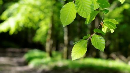 Light green landscapes nature leaves young spring Wallpaper