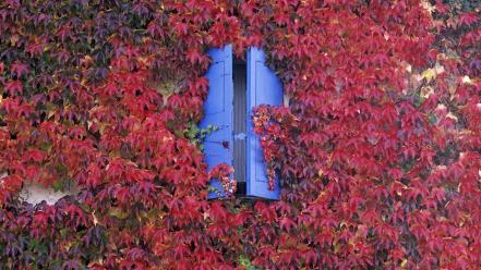 Blue window autumn wallpaper