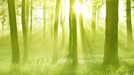Nature forest sunlight scotland Wallpaper