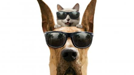 Cats animals dogs funny sunglasses wallpaper