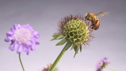 Flowers insects bees thistles wallpaper