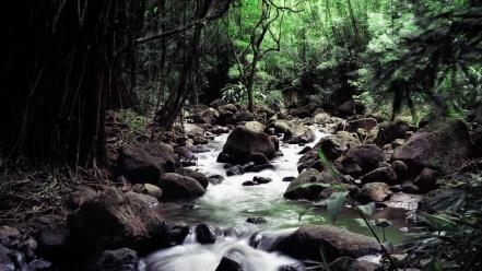 Nature forest streams wallpaper