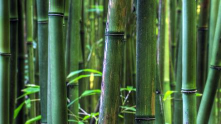 Bamboo hawaii plants panorama stalks wallpaper