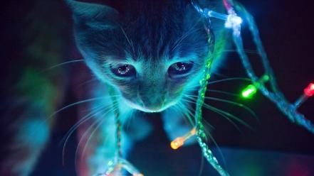 Dark lights cats wallpaper