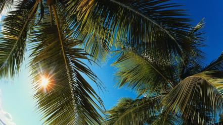 Landscapes nature palm trees caribbean wallpaper