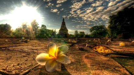 Light landscapes nature flowers thailand mai afternoon plumeria wallpaper