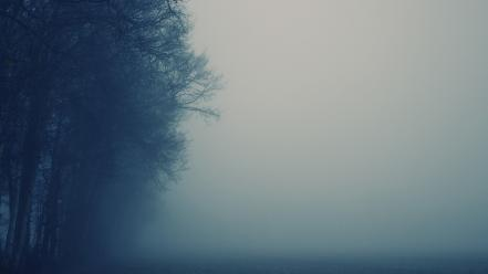 Trees fog wallpaper