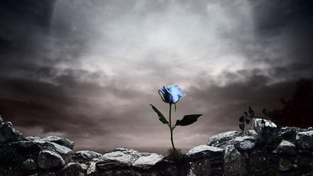 Artistic flowers artwork blue rose background style wallpaper