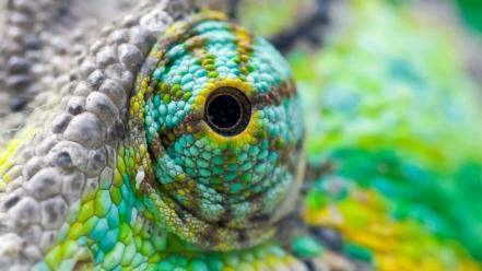 Close-up eyes reptiles Wallpaper