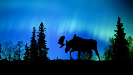 Landscapes nature aurora borealis canada moose wallpaper