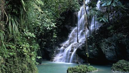 Forest jamaica waterfalls wallpaper