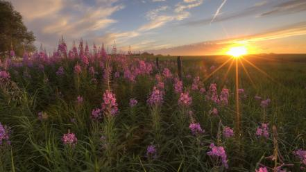 Sunset alberta wildflowers wallpaper