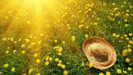 Nature grass sunlight dandelions straw hat Wallpaper