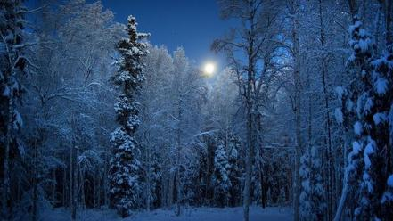 Snow trees alaska wallpaper
