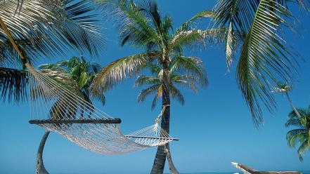 Beach hammock palm trees belize Wallpaper