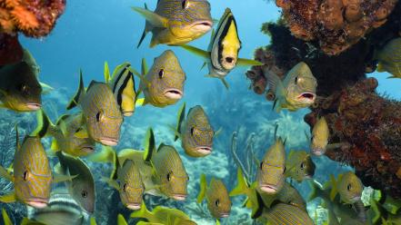 Fish school florida national sanctuary keys Wallpaper